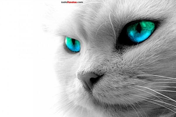 Gato de ojos azules y verdes