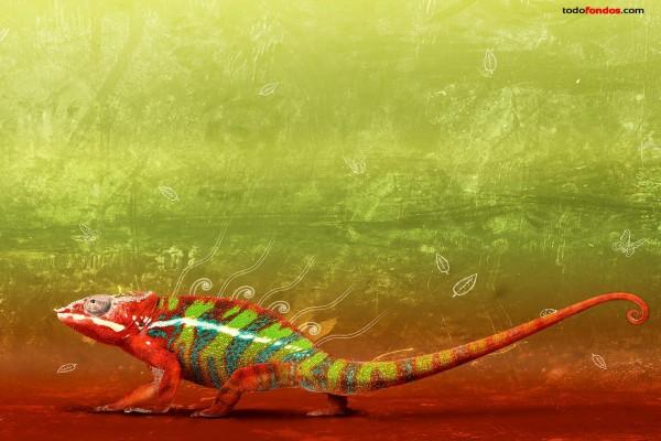 Camaleón multicolor