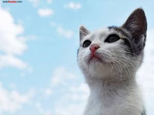 Postal: Gato bajo un cielo azul
