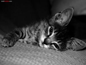 Postal: Gato tumbado