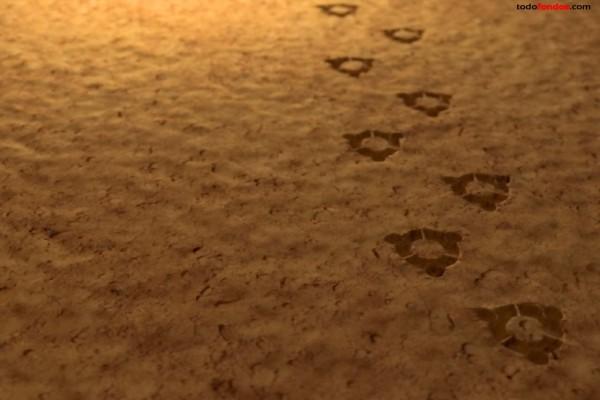 Huellas de Ubuntu en la arena