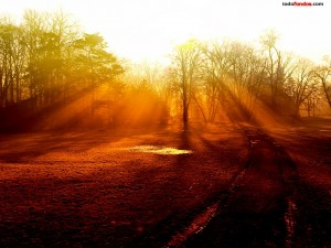 Postal: Árboles filtrando la luz