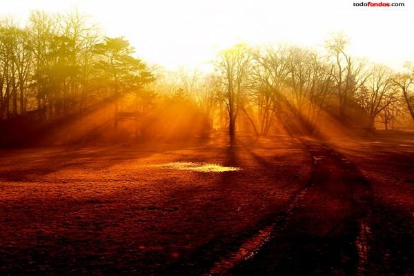 Árboles filtrando la luz