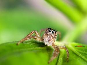Postal: La mirada de la araña