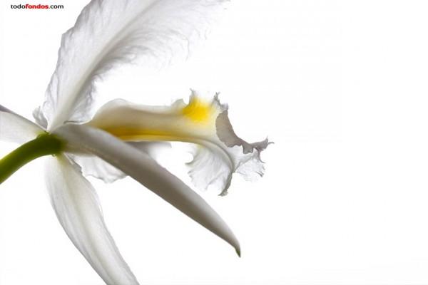Flor blanca sobre fondo blanco