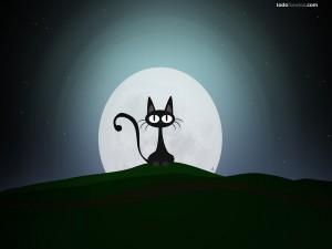 Postal: Gato a la luz de la Luna