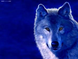 Postal: Lobo azul