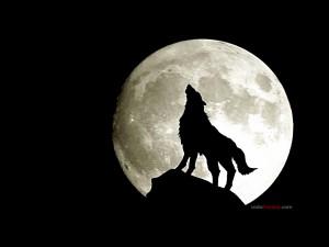 Postal: Lobo aullando a la luna llena