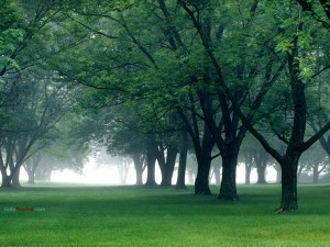 Postal: Niebla mañanera en el centro de Indiana