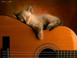 Postal: Gatito durmiendo sobre una guitarra