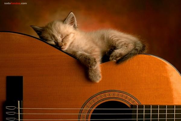 Gatito durmiendo sobre una guitarra