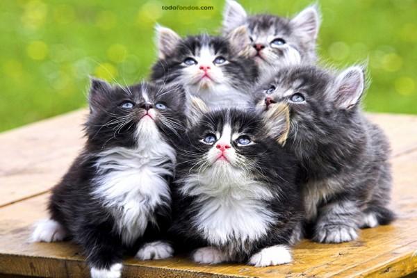 Hermanos gatitos