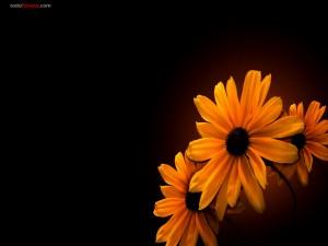 Postal: Flores anaranjadas