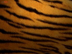 Postal: Piel de tigre