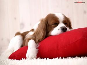 Postal: Cachorro durmiendo