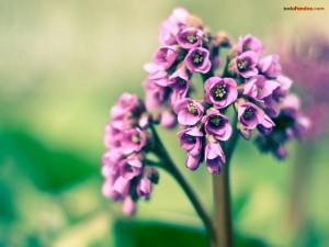 Florecillas moradas