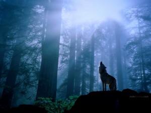 Postal: Lobo aullando a la luz de la luna