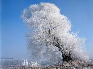 Postal: Un árbol blanco