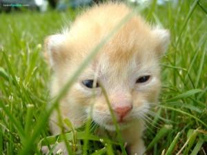 Postal: Un joven gatito en la hierba