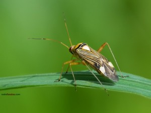 Postal: Insecto sobre hoja