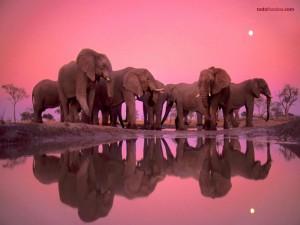 Reunión de elefantes