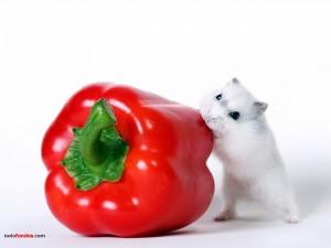 Ratón comiéndose un pimiento
