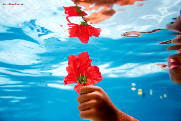 Una flor roja bajo el agua