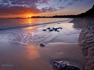 Playa de Kohimarama (Auckland)
