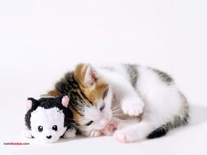 Gatito y su peluche
