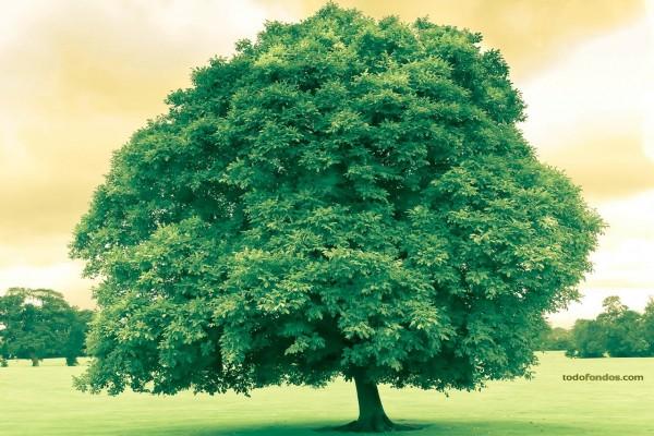 Árbol verde (en Dublín, Irlanda)