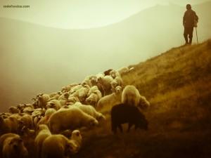 Postal: El pastor y su rebaño
