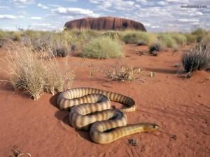 Serpiente en el desierto