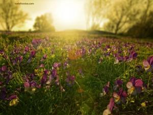 Flores a contraluz