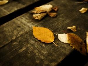 Hojas sobre la madera