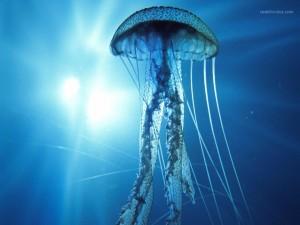 Postal: Una medusa eléctrica