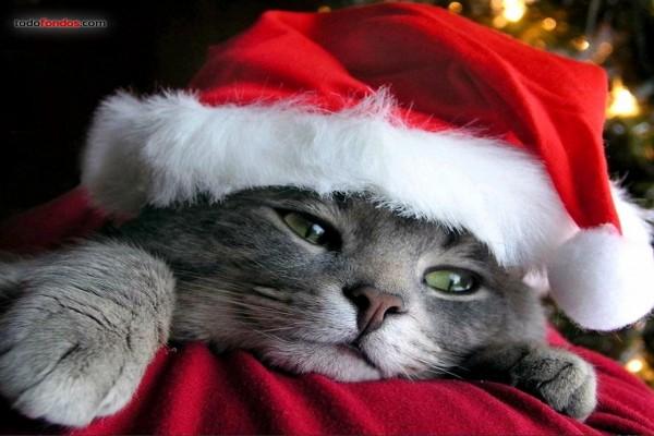 Gato Noel
