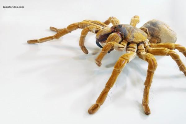 Araña vista de cerca