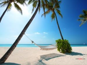 Postal: Playa paradisíaca en las Islas Maldivas