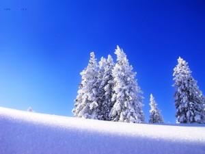 Árboles nevados, bajo un cielo azul