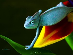 Un camaleón azul