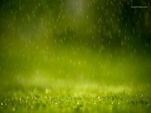 Lloviendo sobre la hierba