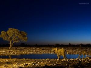 Foto tomada en el Parque Nacional Etosha, en Namibia