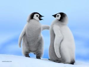 Postal: Pingüinos Emperador, en la isla Snow Hill, en la Antártida