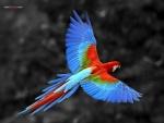 Loro de colores volando con las alas extendidas