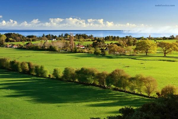 Golden Bay (Nueva Zelanda)