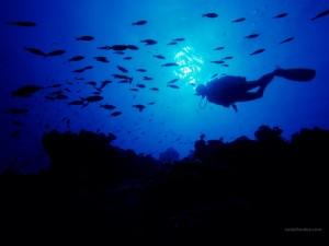 Buceando en la Isla de San Salvador (Bahamas)
