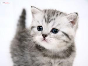 Postal: Un pequeño gatito