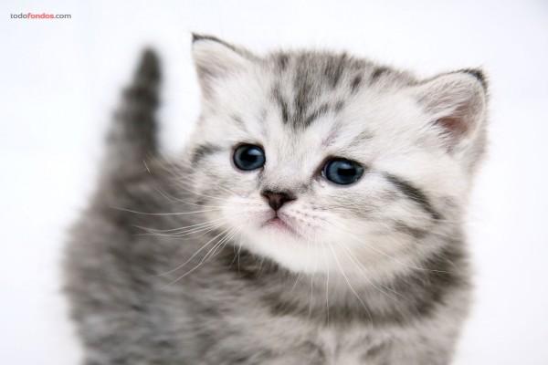 Un pequeño gatito