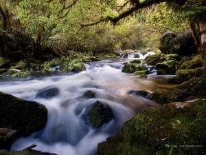 Postal: Río Riwaka (Nueva Zelanda)
