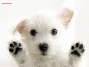 Postal: Un perro en tu pantalla